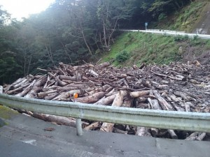 木材撤去作業